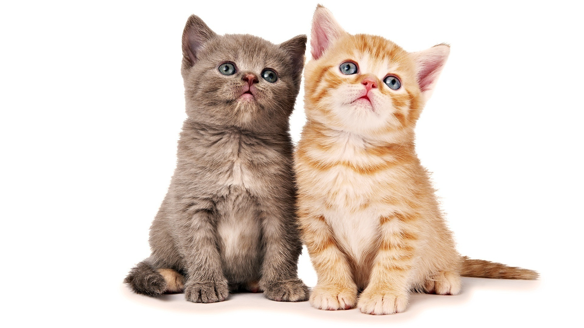 Baby Cats Wallpaper 2
