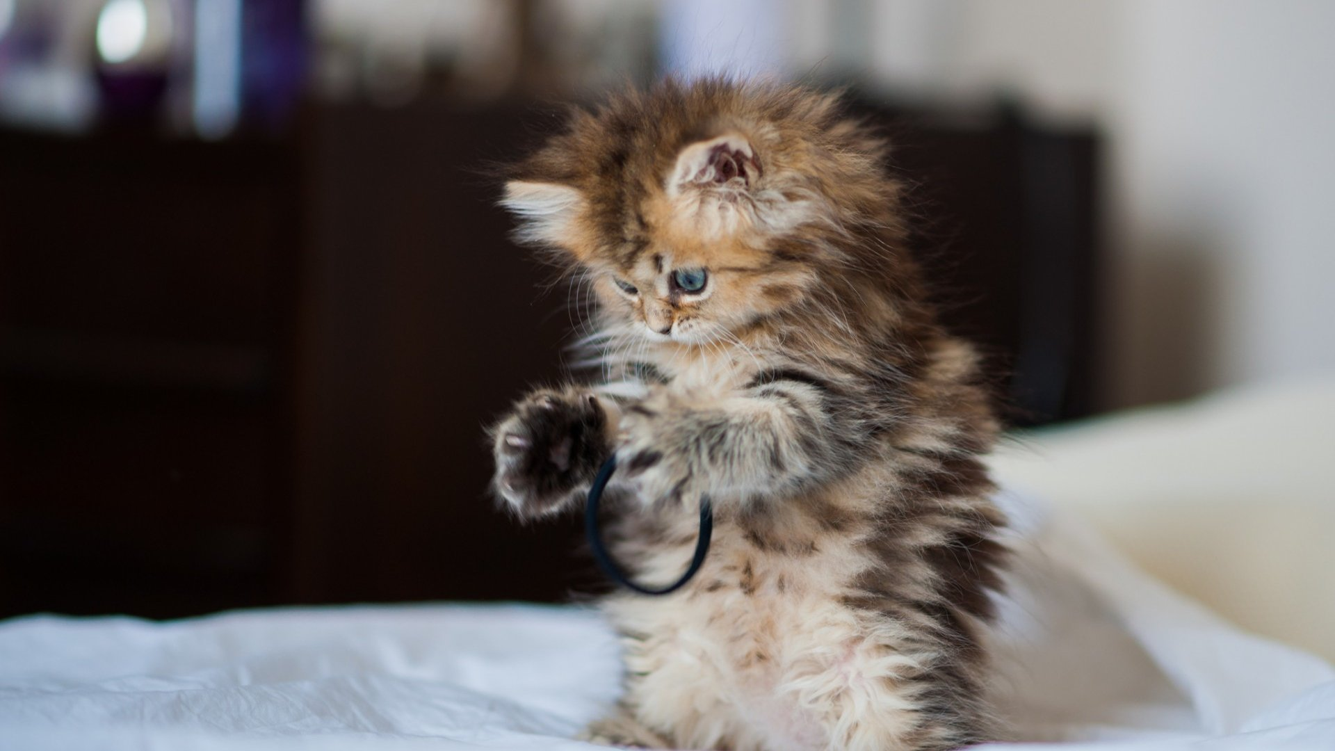 baby cat wallpaper phone