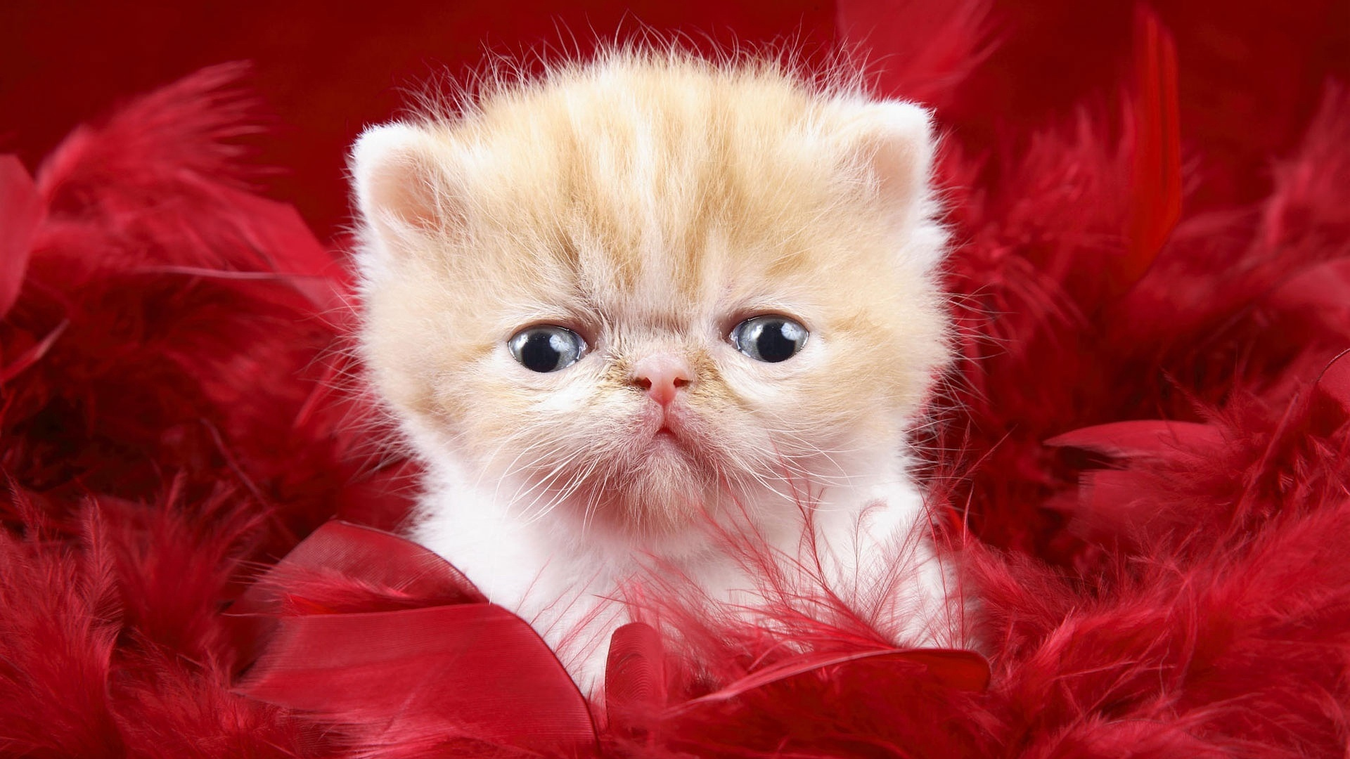 Baby Cats Wallpaper 31