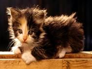 Baby cats wallpaper 11