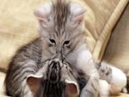 Baby cats wallpaper 14