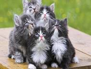 Baby cats wallpaper 15