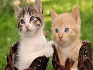 Baby cats wallpaper 16