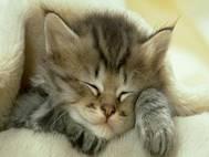 Baby cats wallpaper 21