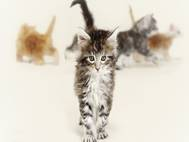 Baby cats wallpaper 23