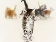 Baby cats wallpaper 23