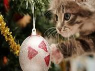 Baby cats wallpaper 24