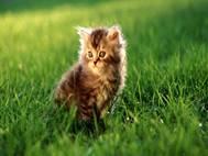 Baby cats wallpaper 30