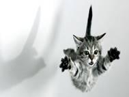 Baby cats wallpaper 6