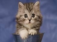 Baby cats wallpaper 7