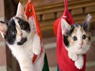 Baby cats wallpaper 9