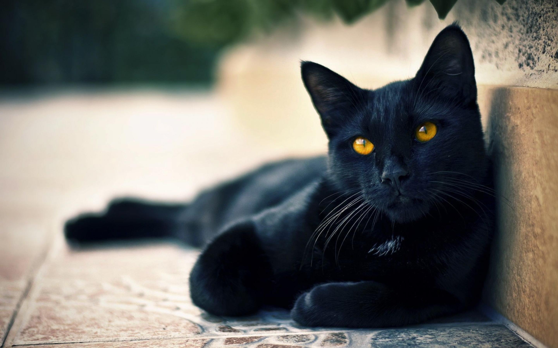 Black Cat wallpaper 10
