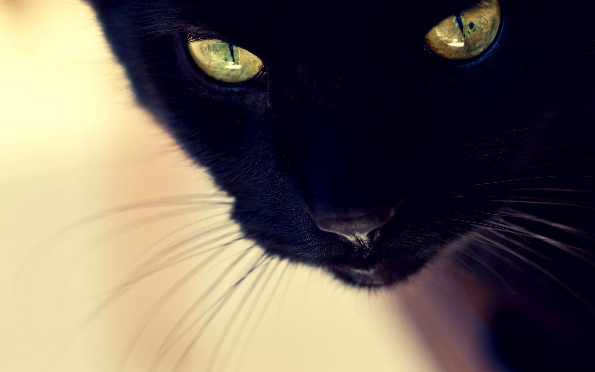Black Cat wallpaper 11