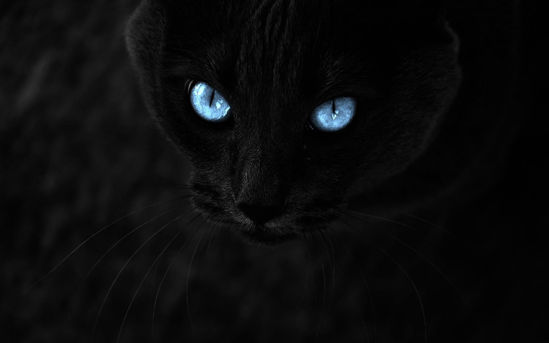 Black Cat Wallpaper 13