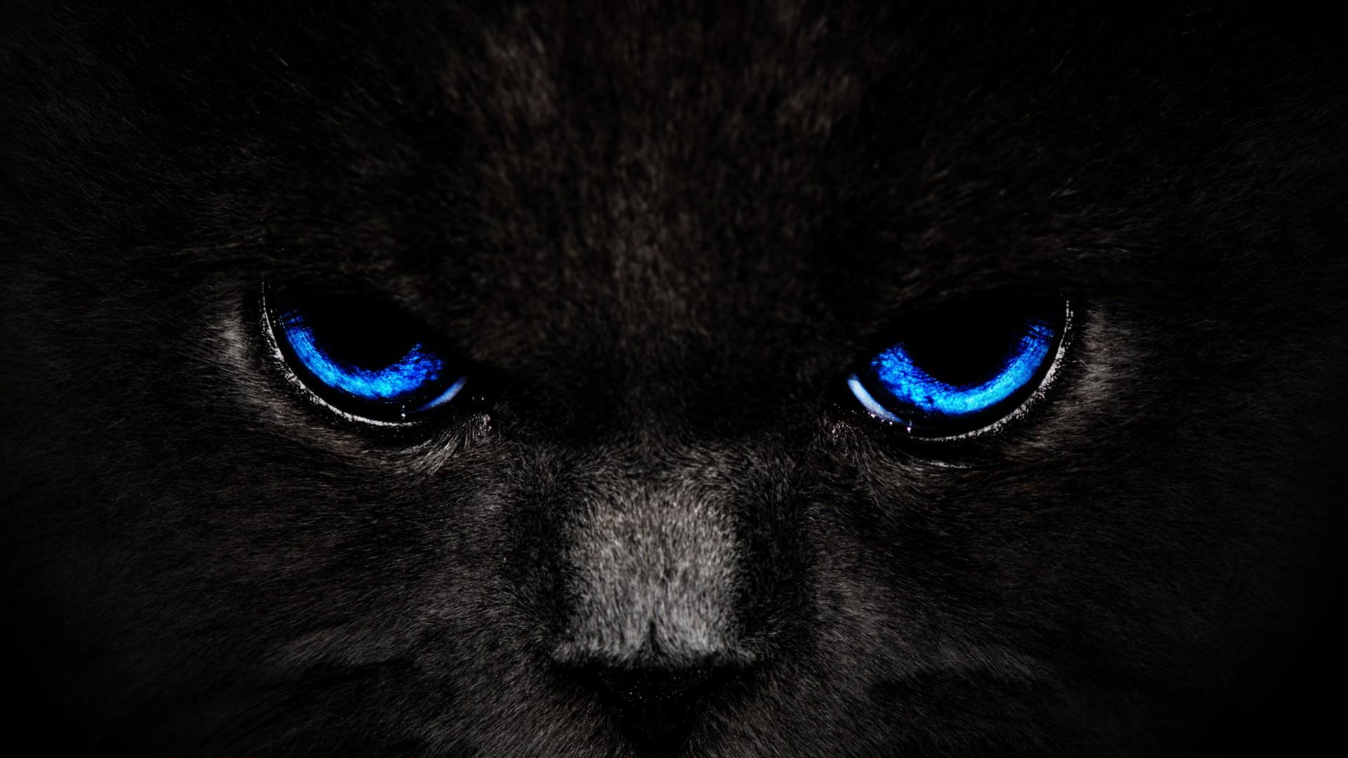 Black Cat wallpaper 15