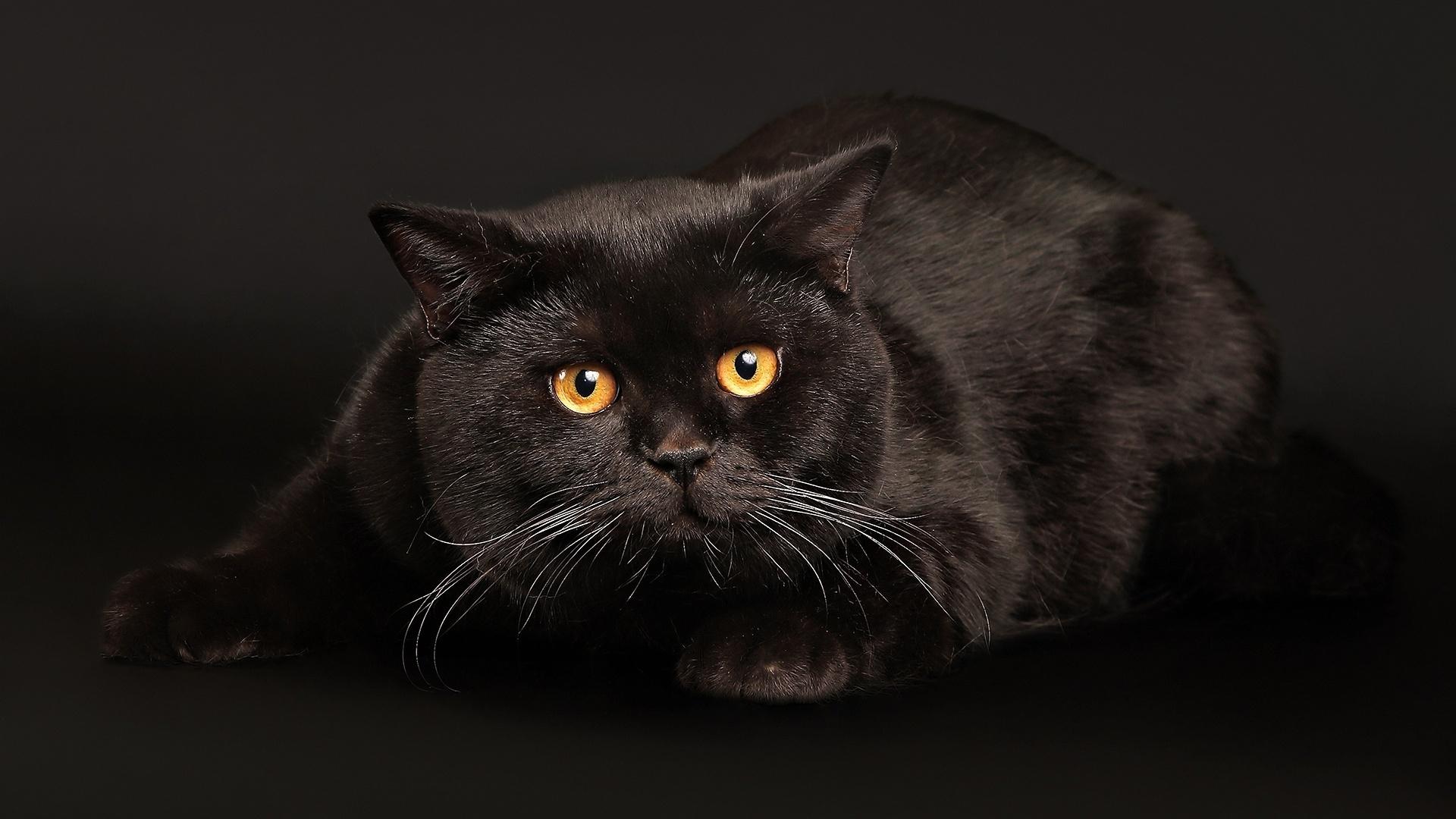 Black Cat wallpaper 16