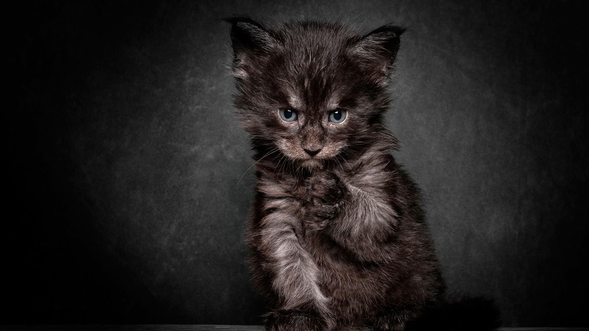 Black Cat wallpaper 17