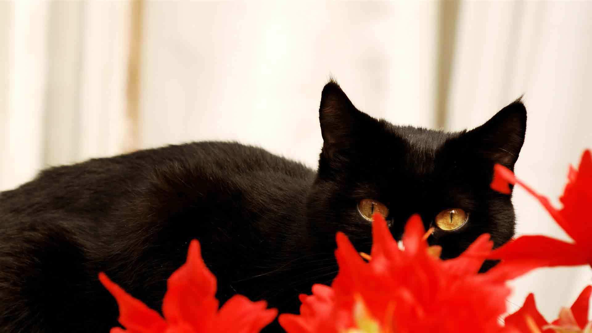Black Cat wallpaper 18