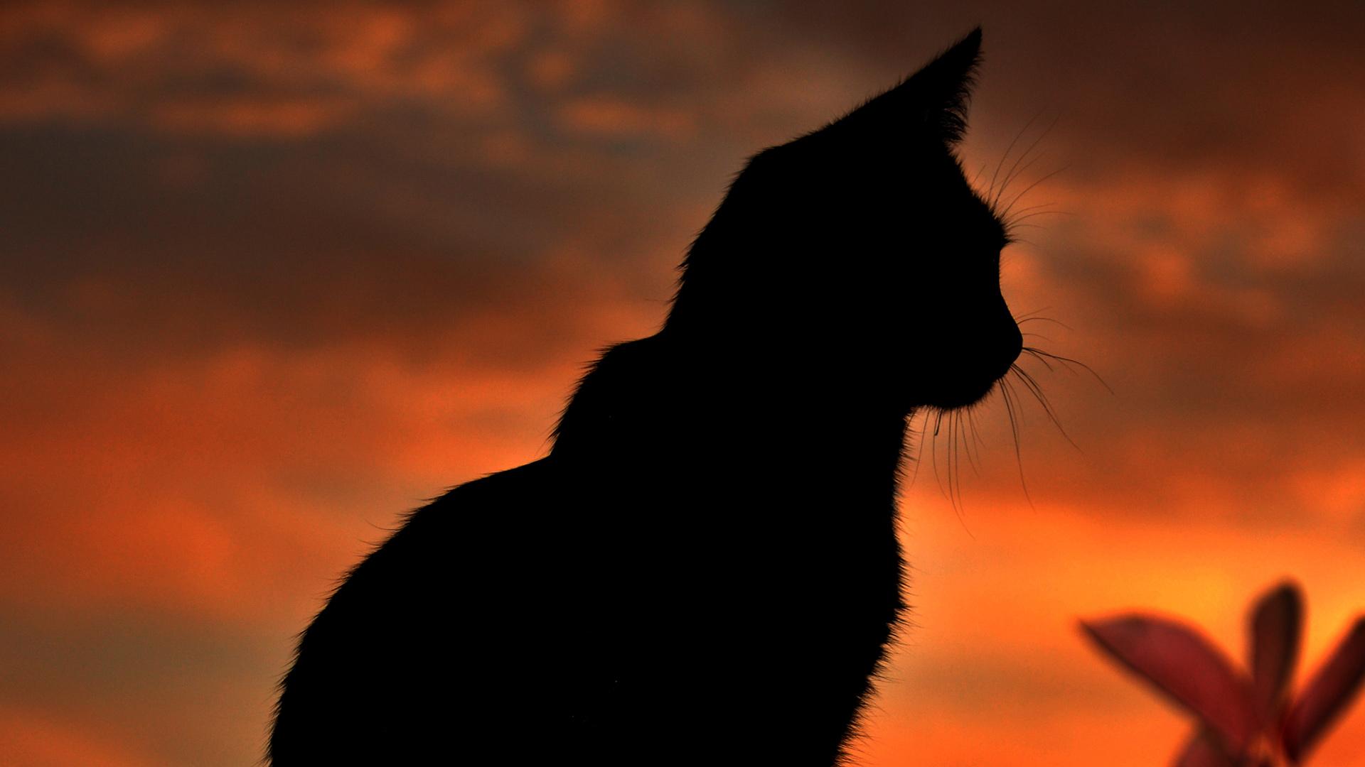 Black Cat wallpaper 20