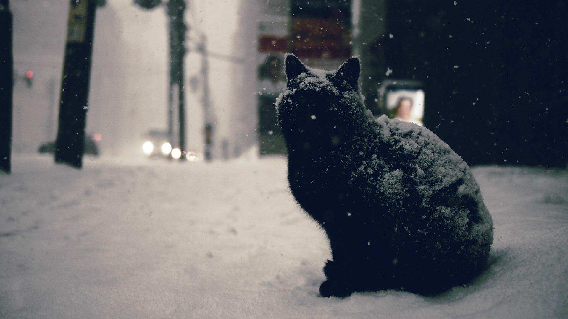 Black Cat wallpaper 22