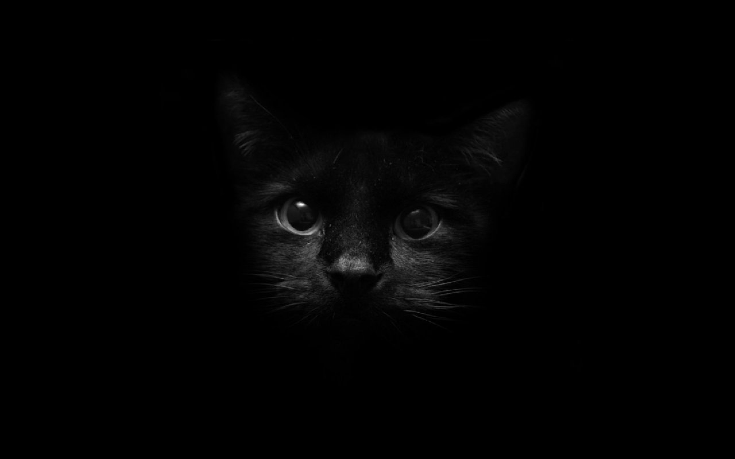Most Inspiring Cat Wallpaper For Your Phone - black-cat-wallpaper-3  Best Photo Reference_773425 .jpg