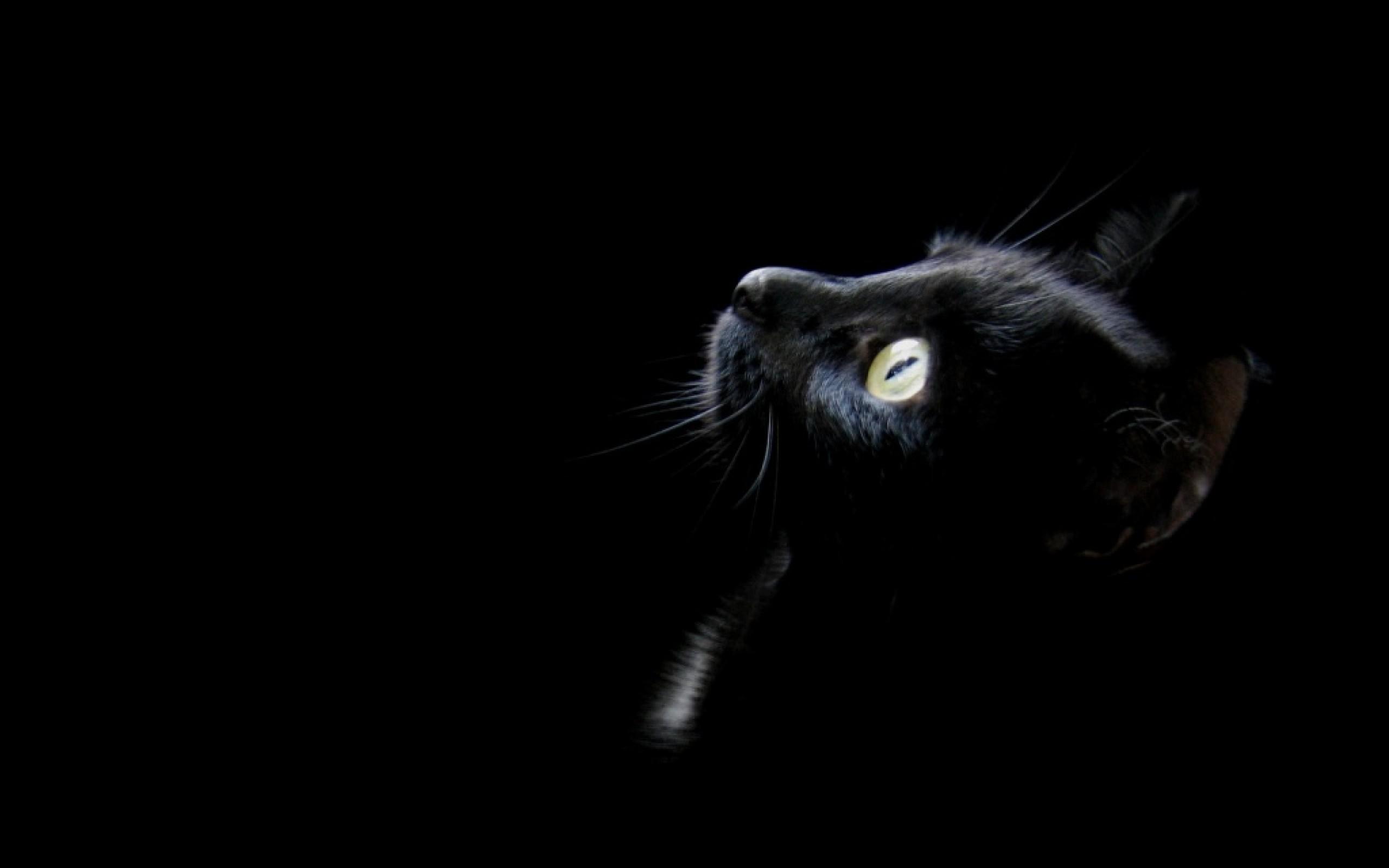 Black Cat wallpaper 6