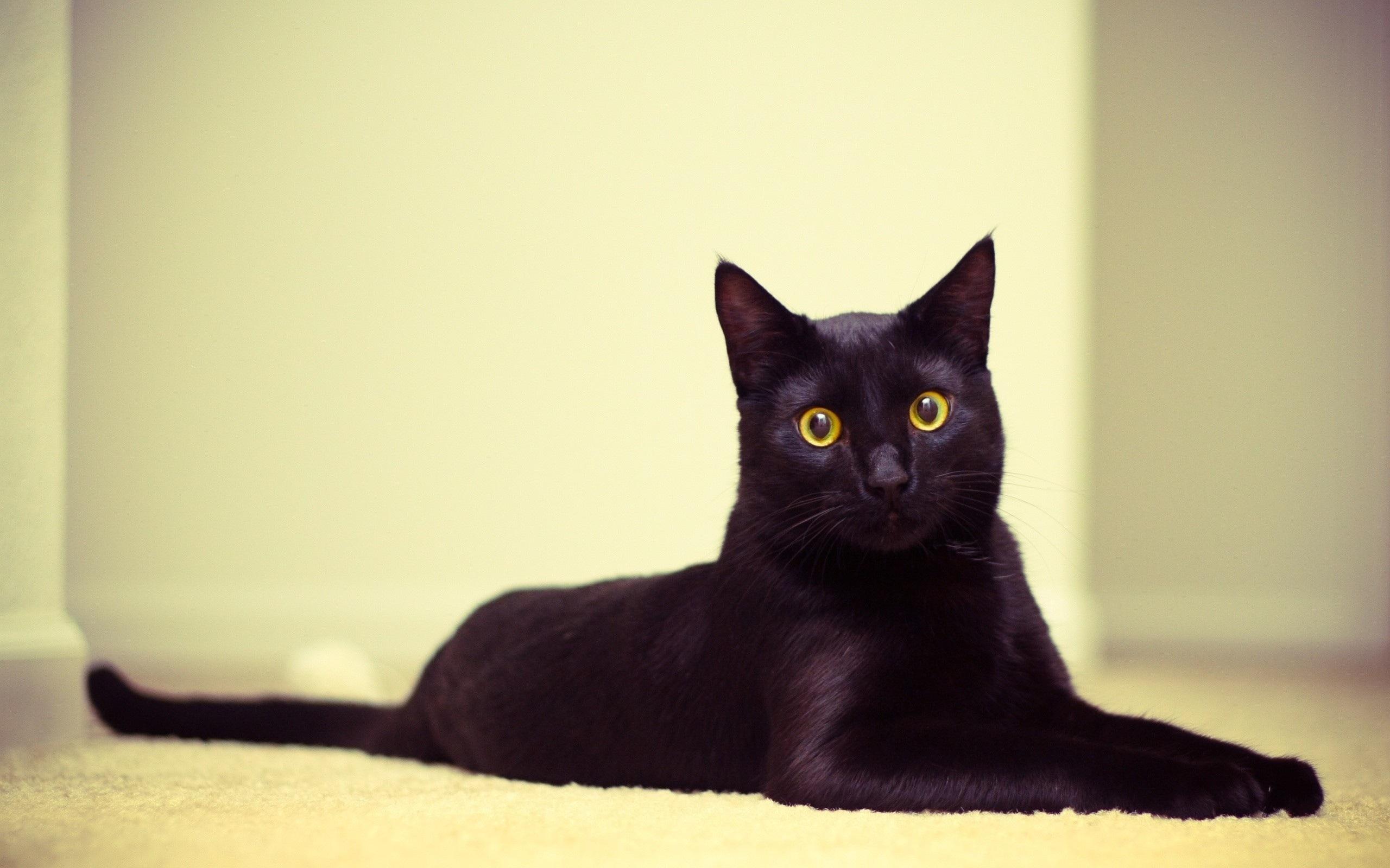Black Cat wallpaper 8