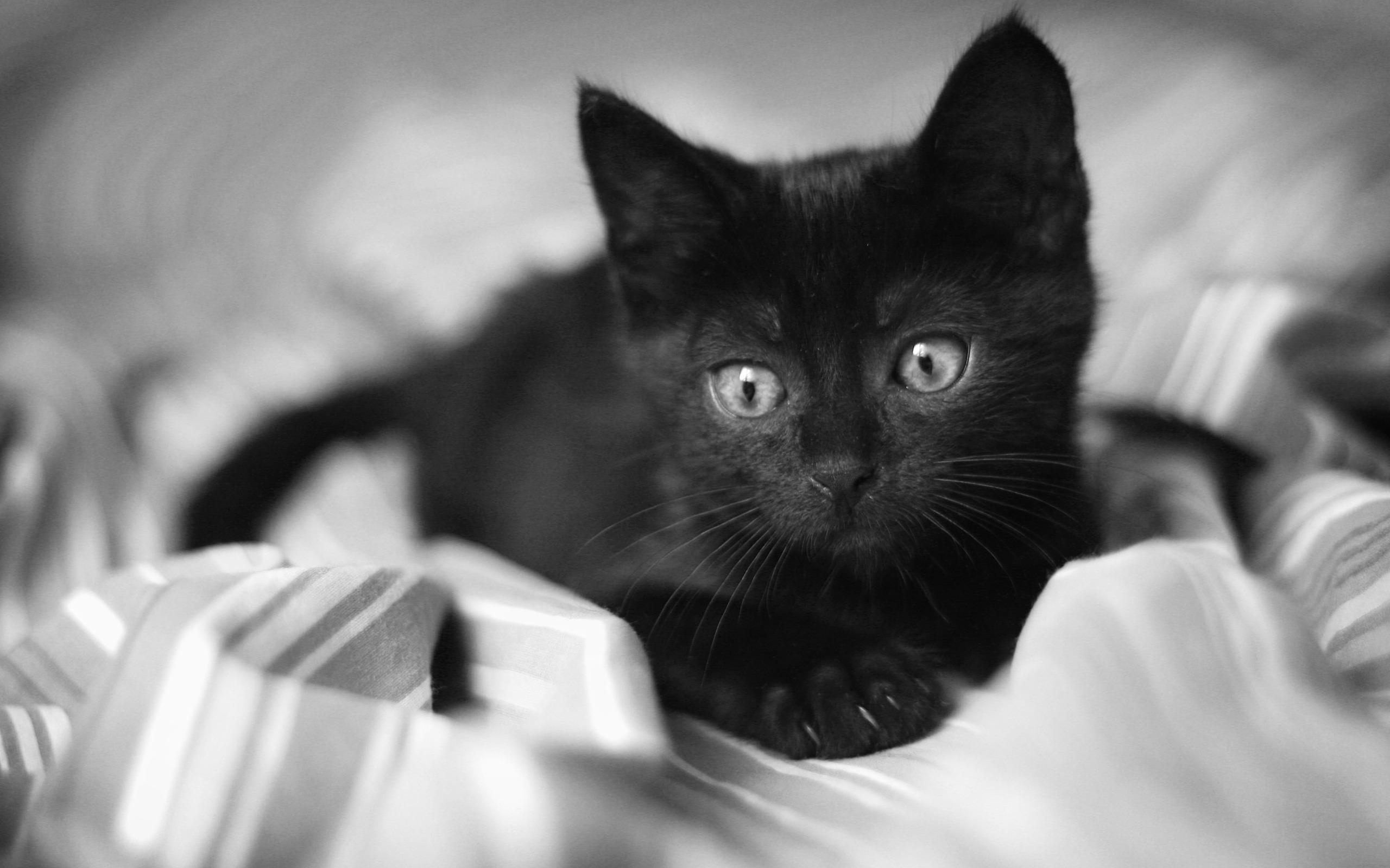 Black Cat wallpaper 9