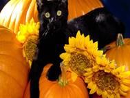 Black Cat wallpaper 19