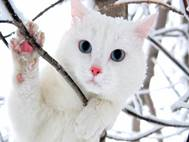 White cats wallpaper 15