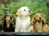Baby Dog wallpaper 10