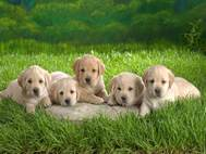 Baby Dog wallpaper 14