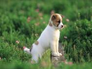 Baby Dog wallpaper 17