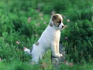 Baby Dog wallpaper 23