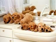Baby Dog wallpaper 8