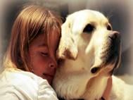 Labrador Dog wallpaper 7