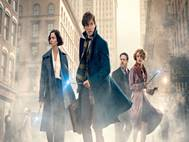 Fantastic Beasts and Where to Find Them wallpaper 1