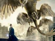 Fantastic Beasts and Where to Find Them wallpaper 2