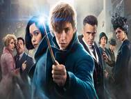 Fantastic Beasts and Where to Find Them wallpaper 3